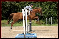Eventing, Dressage and Jumper Training
